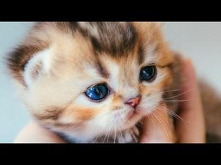 Приколы с котами| Смешное про животных|Видео про котов|Кошки|Позитив|Создай себе хорошее настроение