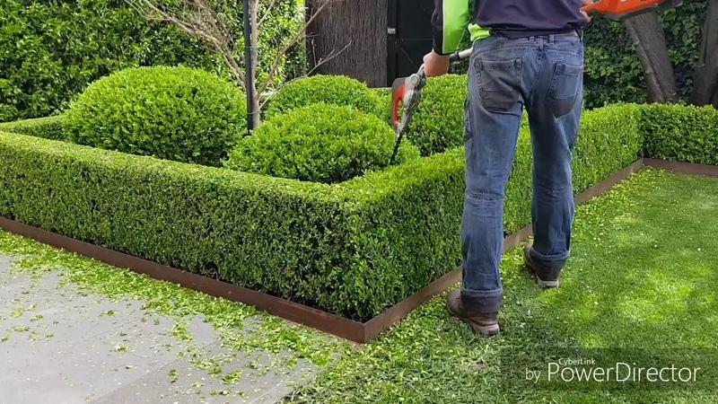 Buxus hedgetrim boxwood topiary hedge cloud