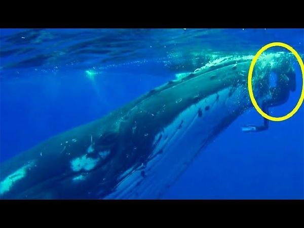 Когда кит бросился на женщину она решила что ей уже не жить Но причина поразила ее еще больше