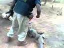 Tortura 8 de Setembro de 2014 Luminas