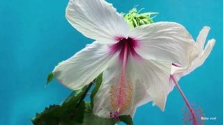 Музыка для души (Цветы распускаются под приятную музыку) !!!Flowers bloom to beautiful music