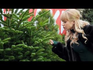Старт продаж ёлок в Москве. Сколько стоит зелёная