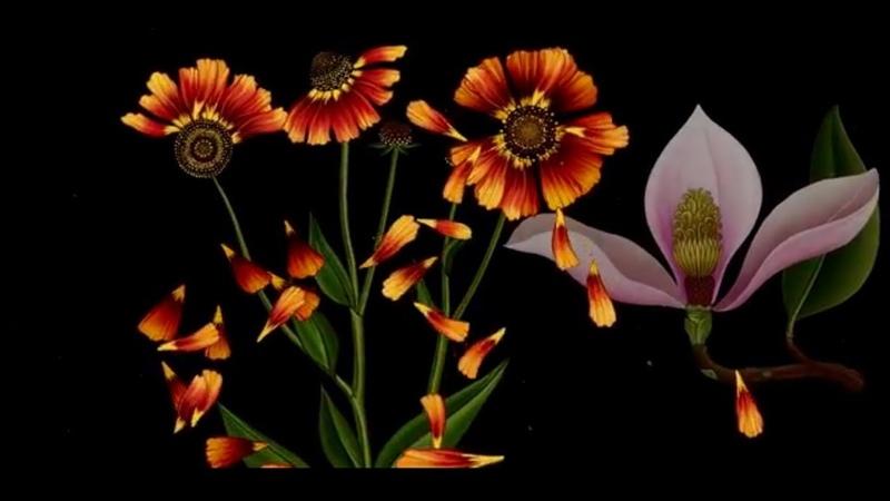 ''Story of Flowers''/История цветов/ ~ Azuma Makoto /Азума Макото/