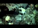 NG: Неисследованные глубины: Обломки в бездне / 2 серия