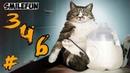 КОТЫ 2020 Смешные Коты 2020 Приколы С Кошками и Котами Funny Cats