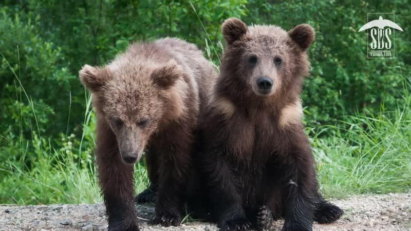 Эвакуация медвежат 2015 год июнь