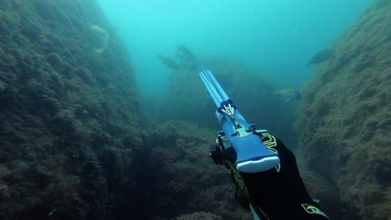 Две висячки. Подводная охота на горбыля.