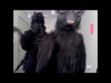 Beyonce Feat. Lady Gaga Video Phone Nutcracker Edition
