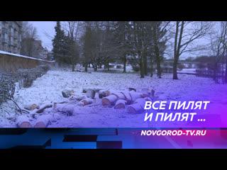 На набережной Александра Невского спилили 15 деревьев и большую часть кустарников