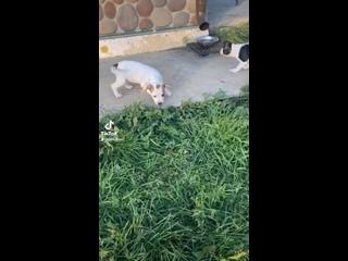 Видео от Аллы Герасименко