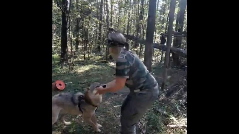Видео от Школа Благополучного содержание животных