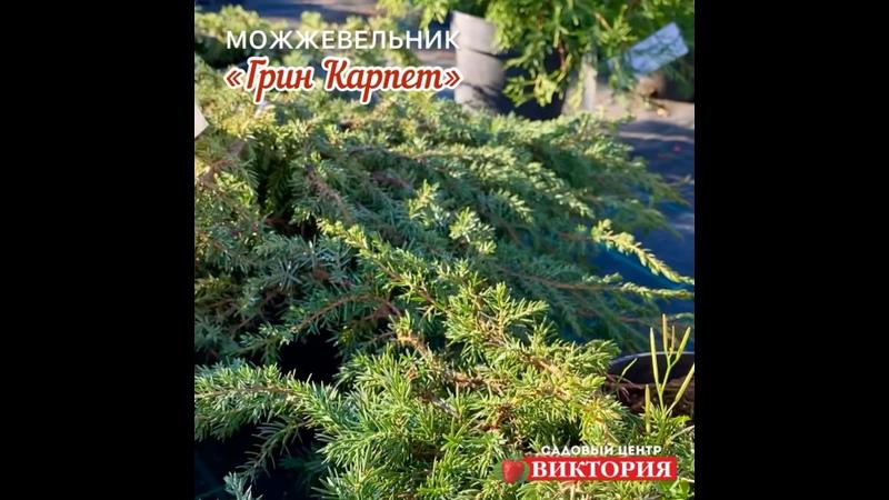 Видео от Садовая фирма ВИКТОРИЯ