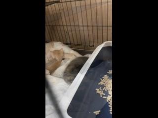 Видео от Кошачий приют ДОМИК