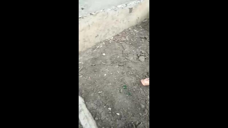 Видео от Анастасии Панцы