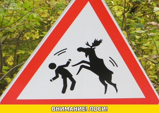 ⚠️Внимание⚠️ Лоси!Северяне сообщают в интернете о ...