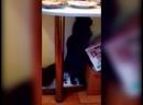 Кот срёт стоя.