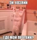 Фотоальбом Владимира Конева