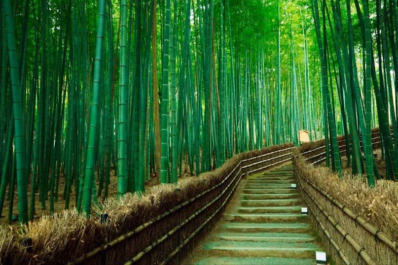 Самые красивые леса нашей планеты., изображение №5