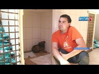 Щенка, утонувшего в битуме, чудом спасли волонтеры в Московской области