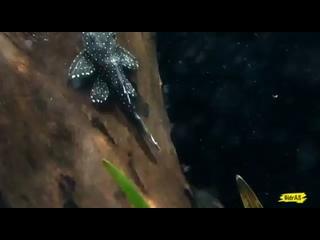 Video by Kamila Zybchenko