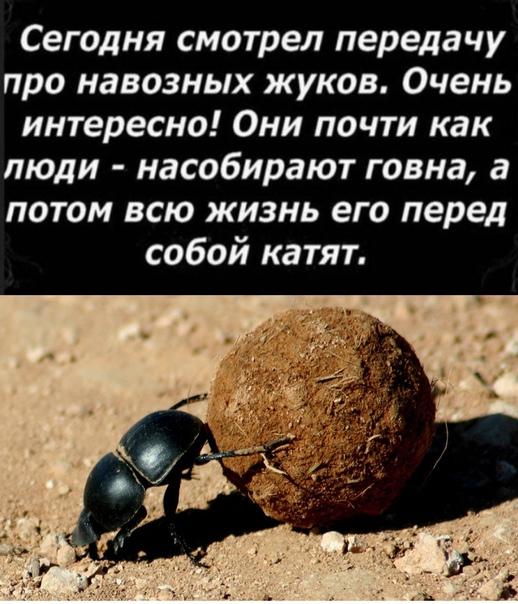 Илья Кнабенгоф -  #6