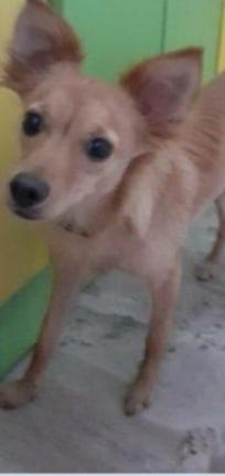 Пропала собачка кастрированная,с чёрным ошейником,очень хотим возврашения домой.Пожалуйста,если кто видел
