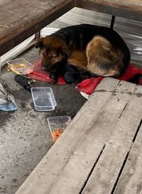 Собака со щенками из парка | ВКонтакте