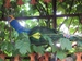 В одном дворе ежи, зубры и птицы., image #12