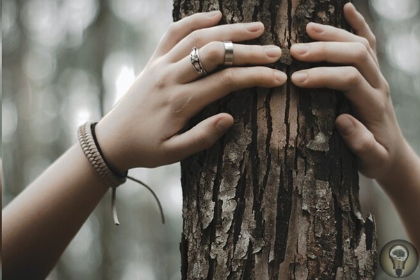 Причины побед Чингисхана ответ кроется в деревьях Каждое кольцо дерева уникально, так как его ширина зависит от того, насколько дождливым был год, когда кольцо образовывалось. Составляя базы