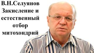 Профессор В.Н. Селуянов - Закисление и естественный отбор митохондрий