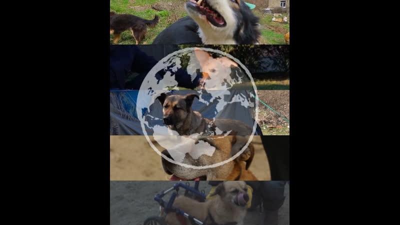 Фунтик Босс и другие пять историй о собаках которых спасли неравнодушные люди