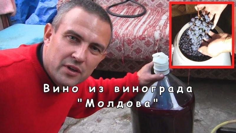 Вино из винограда Молдова деломастерабоится