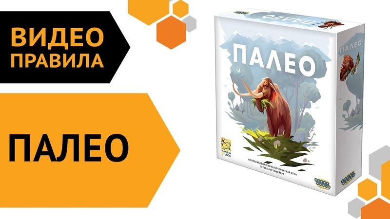 Палео Видеоправила настольной игры 🦧🐘