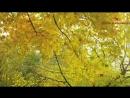 Настольная книга. Указание пути ко спасению - Прп. Нектарий Оптинский. Оптинский цветник