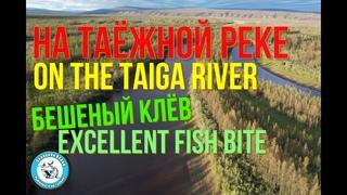 НА ТАЁЖНОЙ РЕКЕ. БЕШЕНЫЙ КЛЁВ ОКУНЯ Часть 1 ON THE TAIGA RIVER. THE FRENZIED BITE OF A PERCH Part #1