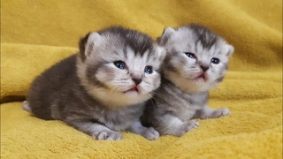 Cute little baby cats 2 Weeks
