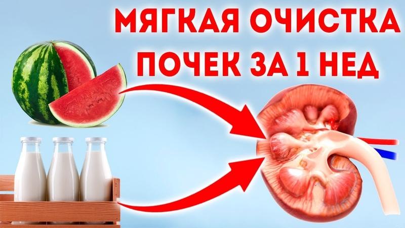 Возьмите молоко и дайте ему 🌳 Лечение почек в домашних условиях народными средствами