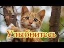 Приколы с котами Добрый позитив Видео про котов КошкиПро ЖивотныхСоздай себе хорошее настроение