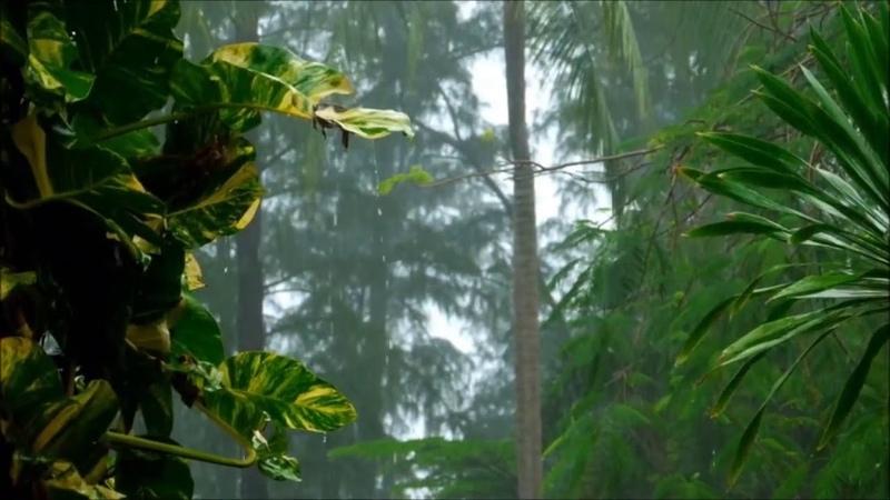 Yağmur Sesi Sağanak Yağmur ve Gök Gürültülü Yağmur Dinlendirici Gök Gürültülü Sağanak 3 Saat