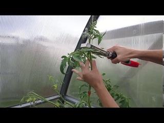 Тапенер (подвязчик растений) устройство и принцип работы