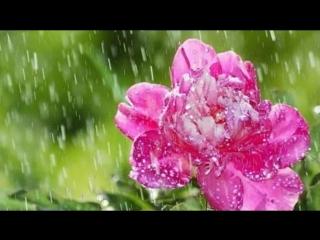 Одинокая Флейта - Летний дождь